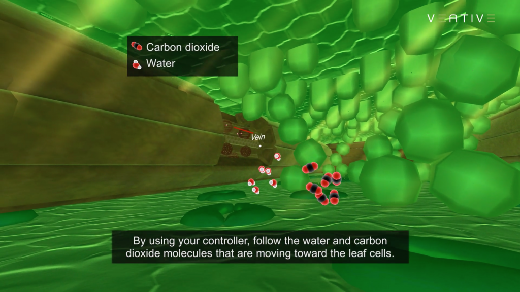 Copy of Screen Shot Photosynthesis.